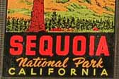 Early Vintage Travel Decal From Sequoia National Park in California, Features the Famous General Sherman Tree